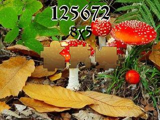 O quebra-cabeça №125672