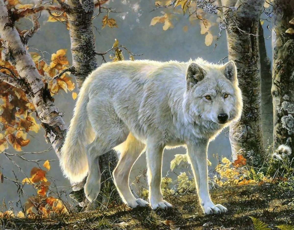 O quebra-cabeça Recolher o quebra-cabeças on-line - White wolf