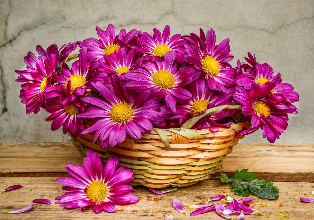O quebra-cabeça Recolher o quebra-cabeças on-line - Chrysanthemums in a basket