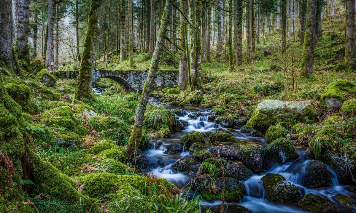 O quebra-cabeça Recolher o quebra-cabeças on-line - Stone bridge in the forest