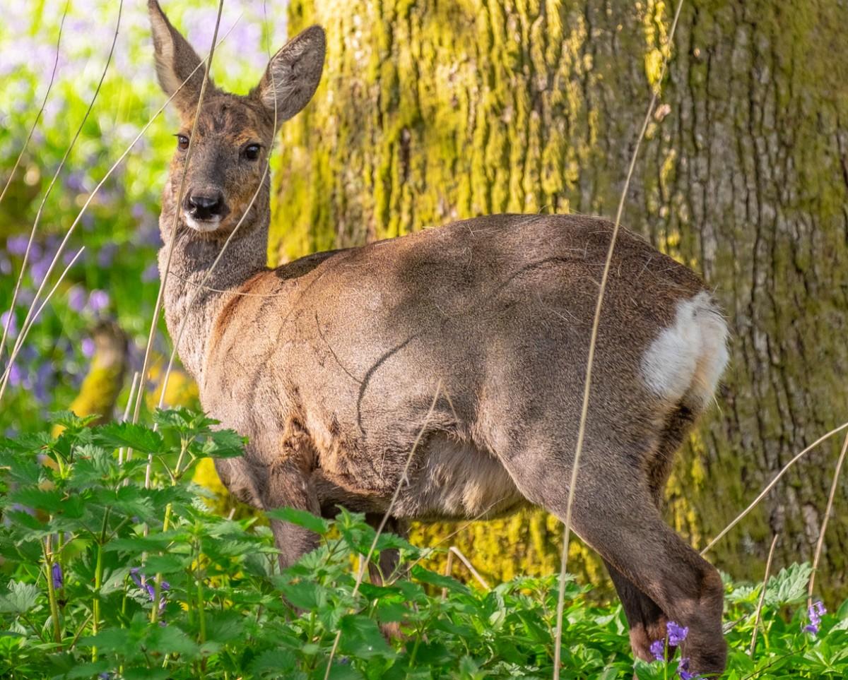 O quebra-cabeça Recolher o quebra-cabeças on-line - Deer