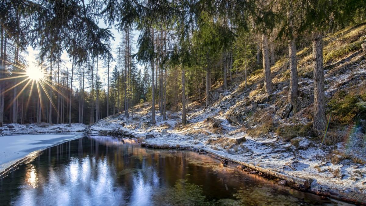 O quebra-cabeça Recolher o quebra-cabeças on-line - First snow in the woods