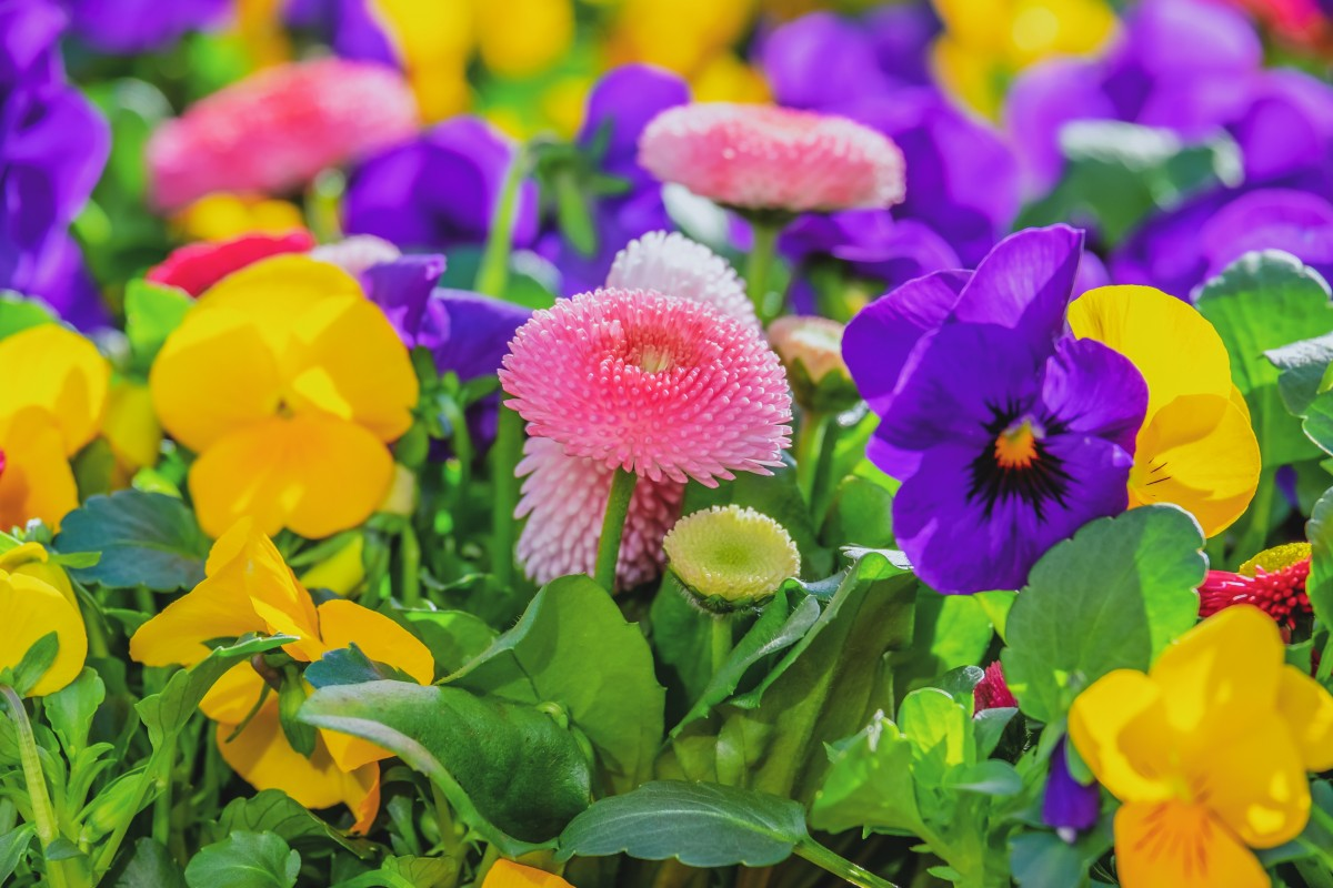 O quebra-cabeça Recolher o quebra-cabeças on-line - Colorful flower garden