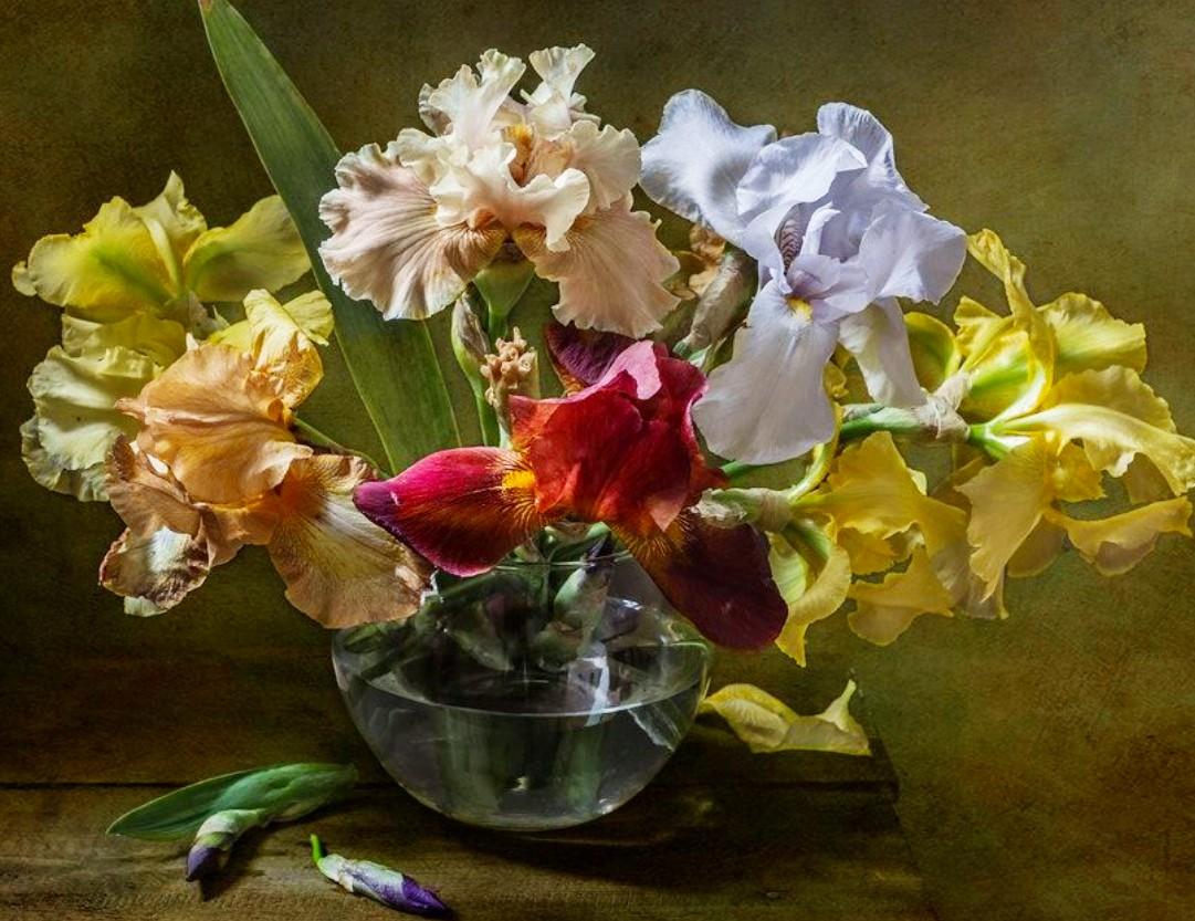 O quebra-cabeça Recolher o quebra-cabeças on-line - Colored irises