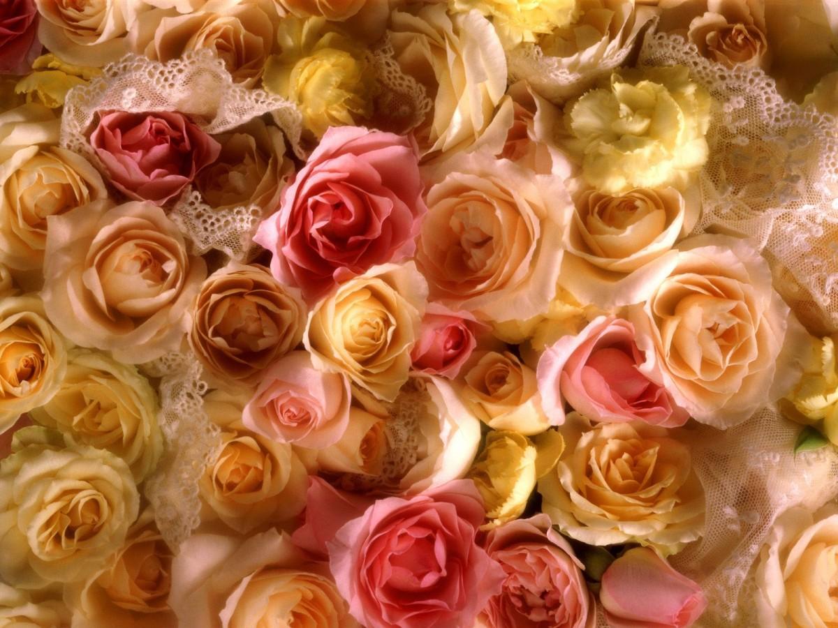 O quebra-cabeça Recolher o quebra-cabeças on-line - Roses and lace