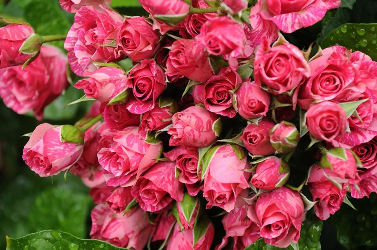 O quebra-cabeça Recolher o quebra-cabeças on-line - Pink bouquet