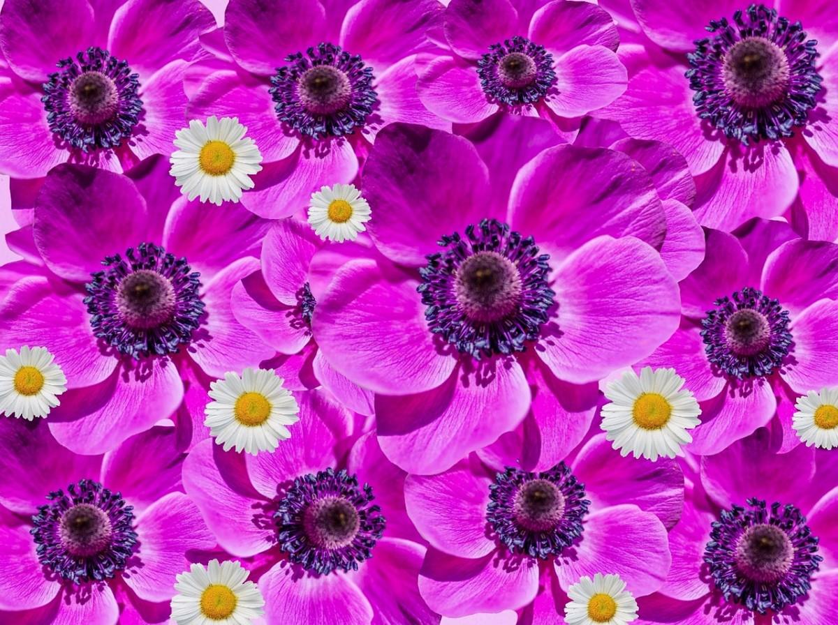 O quebra-cabeça Recolher o quebra-cabeças on-line - Flowers