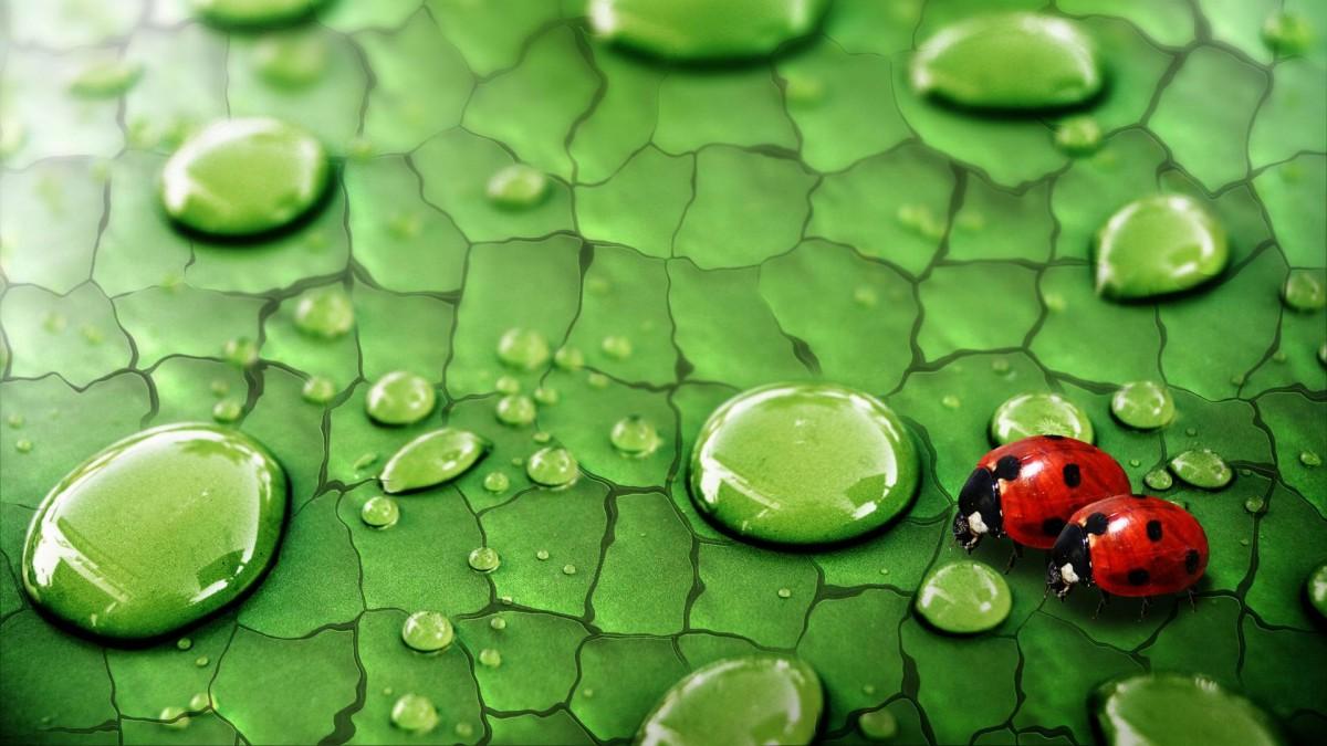 O quebra-cabeça Recolher o quebra-cabeças on-line - The Morning of Ladybug
