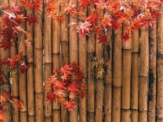 Собирать пазл Bamboo fence онлайн
