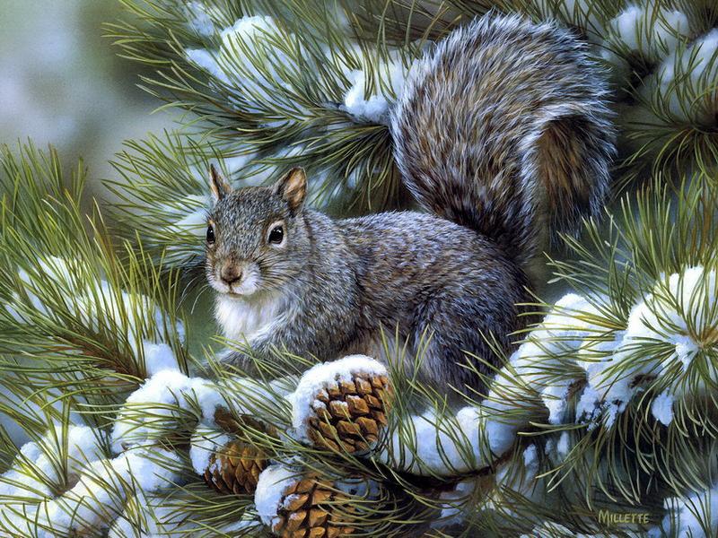 O quebra-cabeça Recolher o quebra-cabeças on-line - Squirrel