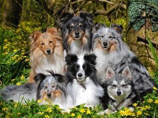 Собирать пазл Two breeds онлайн