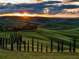 Собирать пазл Cypress Trees Of Tuscany онлайн