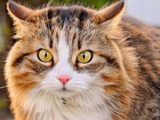 Собирать пазл Cat look онлайн