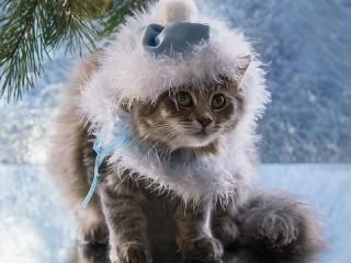 Собирать пазл Holiday cat онлайн