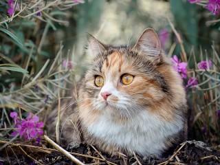 Собирать пазл Cat in flowers онлайн