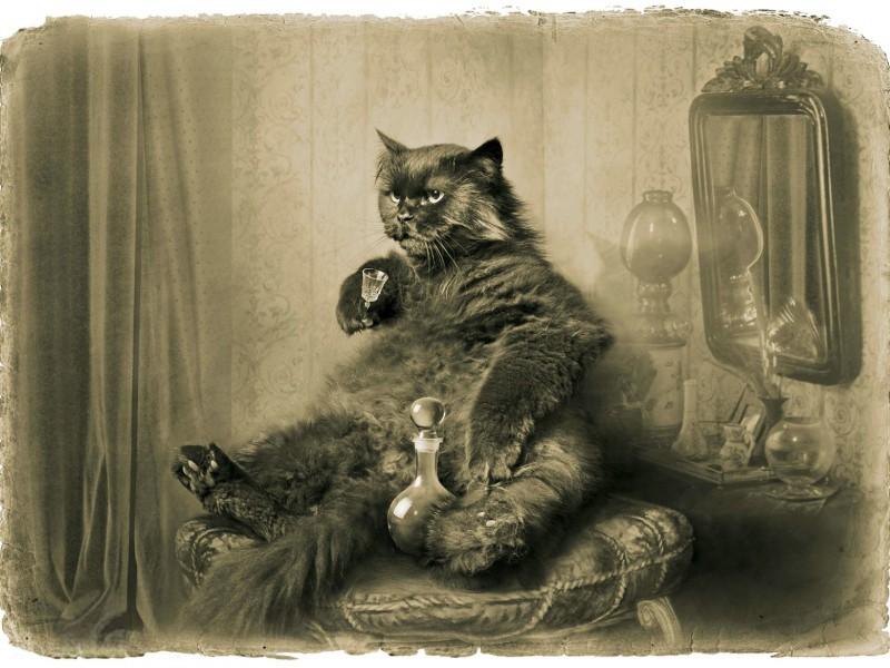 O quebra-cabeça Recolher o quebra-cabeças on-line - Behemoth the cat