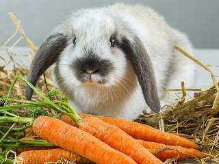 Собирать пазл Rabbit онлайн