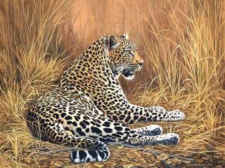 Собирать пазл Leopard resting онлайн