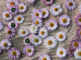 Собирать пазл Lilac daisies онлайн