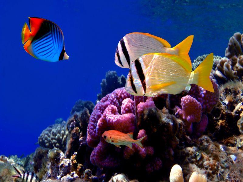 O quebra-cabeça Recolher o quebra-cabeças on-line - On the reef