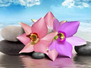 Собирать пазл Orchids and stones онлайн
