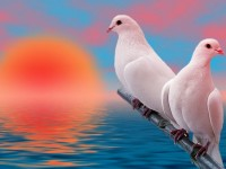 Собирать пазл A couple of pigeons онлайн