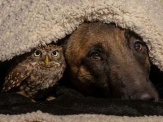 Собирать пазл Under the blanket онлайн