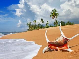 Собирать пазл Shell on the beach онлайн