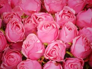 Собирать пазл Pink buds онлайн