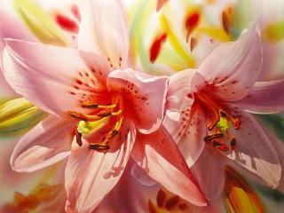 Собирать пазл Pink lilies онлайн