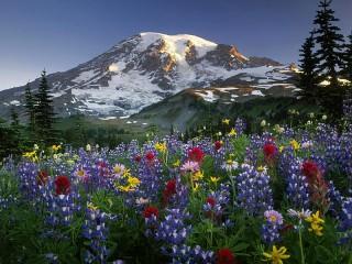 Собирать пазл Altai flowers онлайн