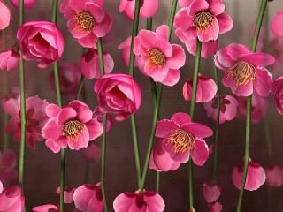 Собирать пазл Flowers on canvas онлайн