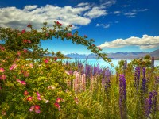 Собирать пазл Flowers by the sea онлайн