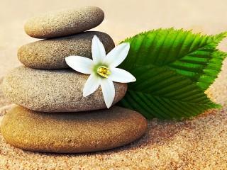 Собирать пазл Flower and stones онлайн