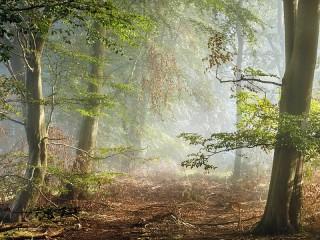 Собирать пазл Morning in the forest онлайн