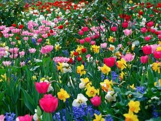 Собирать пазл Spring has come онлайн