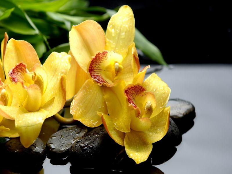 O quebra-cabeça Recolher o quebra-cabeças on-line - zheltie orhidei