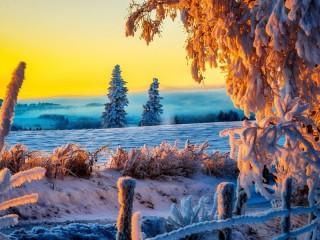 Собирать пазл Winter scene онлайн