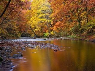 Собирать пазл Gilded river онлайн